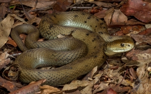 snake sitting on leaves