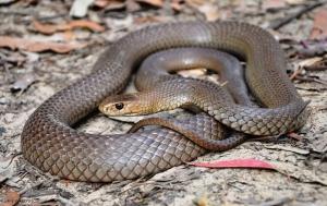 snake resting on sanding ground