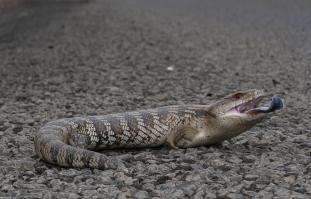 lizard on ground