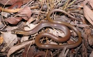 brown snake on leaves