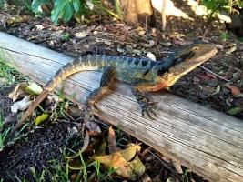 lizard on wooden pole