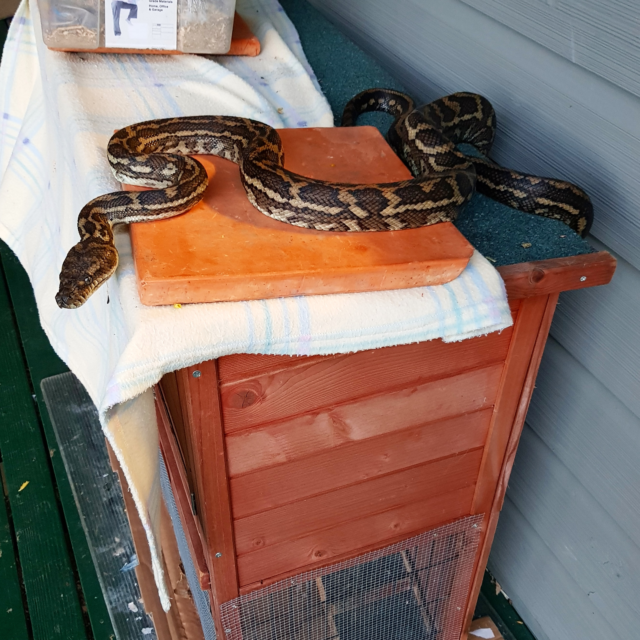 snake on pet cage