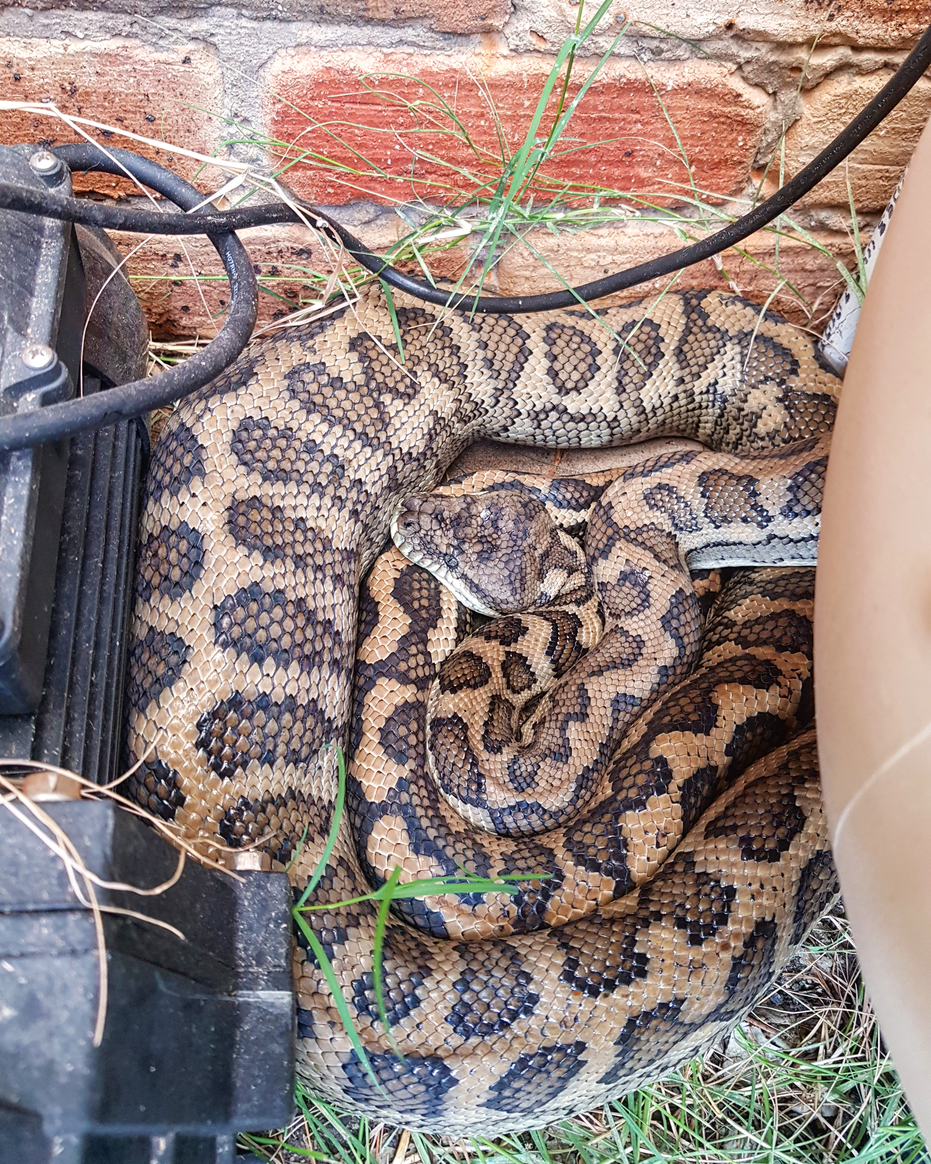 snake curled up next to water pump